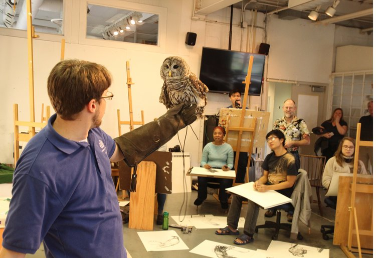 Owl visits Life Drawing class.