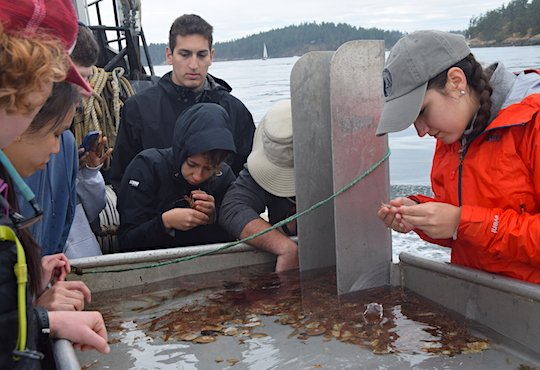 Invertebrate Biology class trip on Salisch Sea