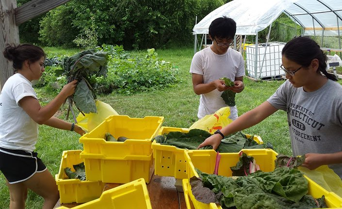 Students sorting greens from the farm