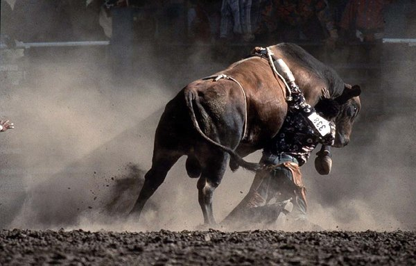 A bull rider is dragged as the outstretched hand of the rodeo clown rushes in to help during a rodeo in a rodeo in Oakland, Calif.