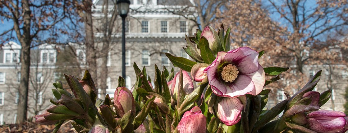 Blooming flowers in front of Parrish Hall