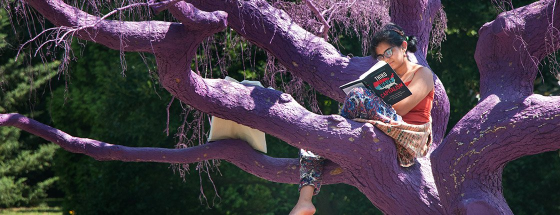 A student reads in a purple tree on Swarthmore's campus