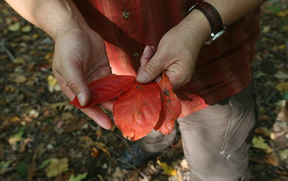 examining the flora at Crum Woods