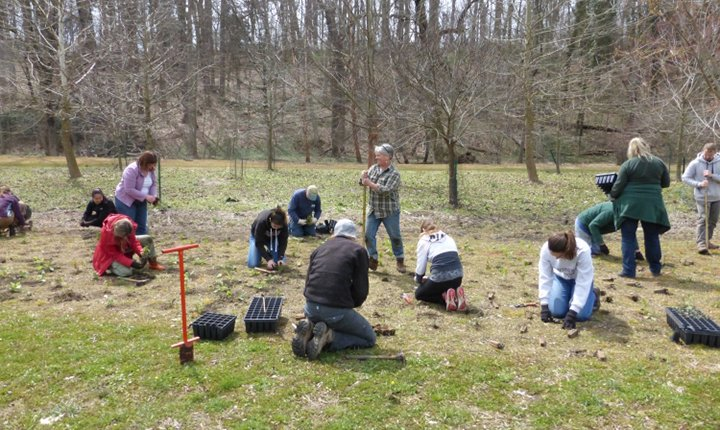 Planting in the Crum Woods