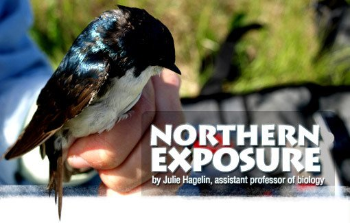 Northern Exposure by Julie Hagelin, assistant professor of biology