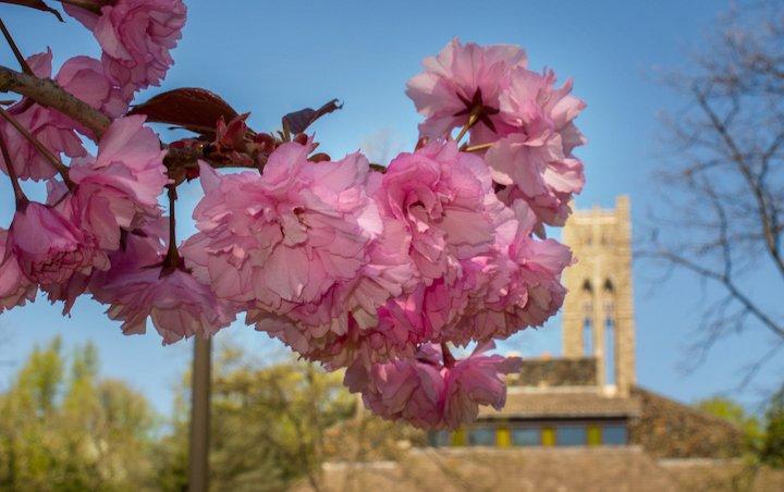 Spring at Swarthmore