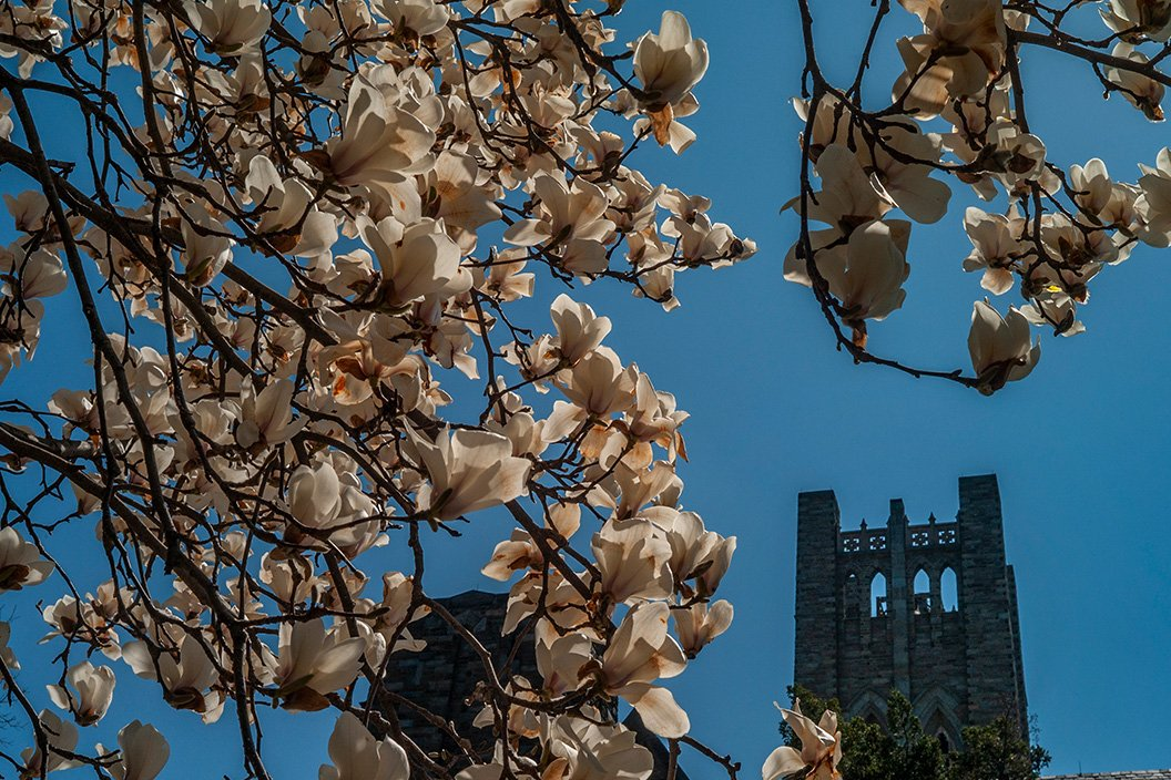 Flowers in foreground with clothier bell tower in background