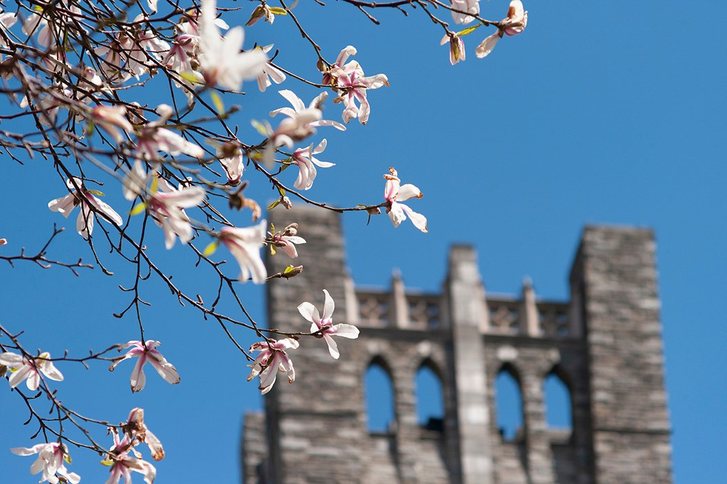 Blooming flowers in focus in front of clothier bell tower