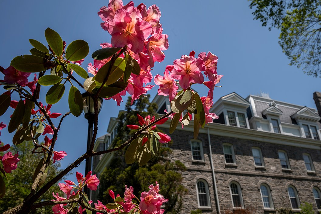 Pink flower in foreground with Parrish Hall in background