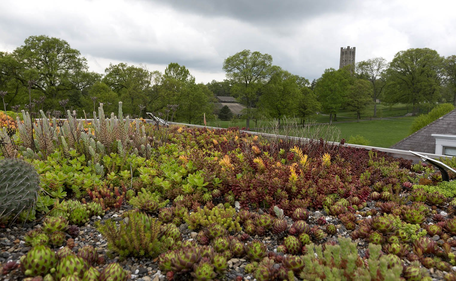 Green roof on campus